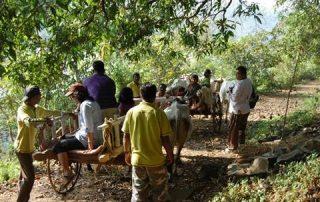 Bullock Cart Rides at Ecomantra Eco Camps and Resorts