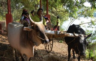 Bullock Cart Rides • Outdoor Adventures at Ecomantra Experiential Eco Camps & Resorts