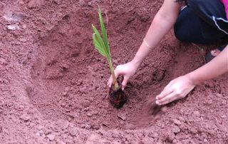 Tree Plantation • CSR
