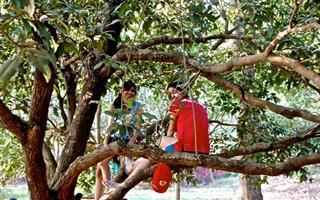 Climbing Trees Eco Adventures