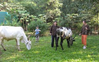 Rural Ecotourism at Ecomantra Experiential Eco Camps & Resorts